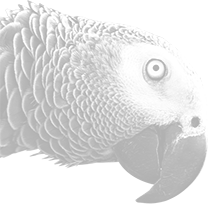 Parrot Two